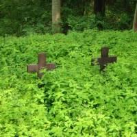 Cmentarz wojenny w Mielnie