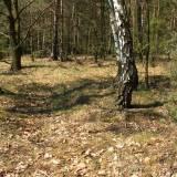 9946_podos_nowy_20090426.jpg
